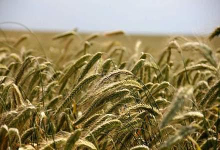 Constantin: Reducerea TVA la alimente va scadea preturile si va relansa consumul