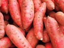 Cartoful dulce de Coreea,...