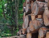 Austriecii Holzindustrie...