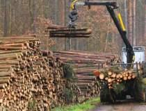 O parte din lemnul vandut de...