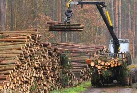 O parte din lemnul vandut de firma lui Traian Larionesi ajungea la Holzindustrie Schweighofer