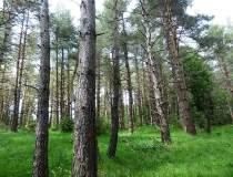 Holzindustrie Schweighofer...