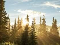 Ponta: Exportul de lemne va...