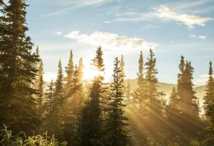 Ponta: Exportul de lemne va fi suspendat prin lege, nu prin ordonanta