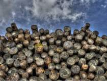 Exportul de lemn,...