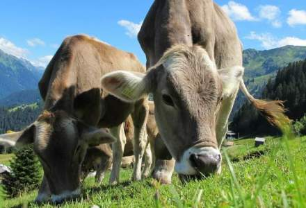 APIA sustine cu 40 mil. euro producatorii de lapte si carne