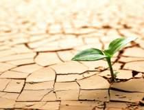 Efectele secetei: pierderi de...