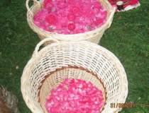 Afacere cu trandafiri pentru...