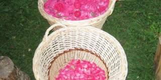 Afacere cu trandafiri pentru dulceata. Costuri mari, riscuri mari, dar si rasplata pe masura