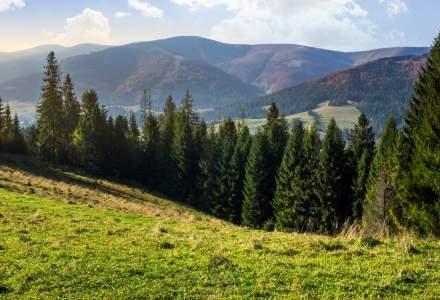 Tarile cu cele mai multe paduri. Romania are paduri pe 29% din suprafata tarii