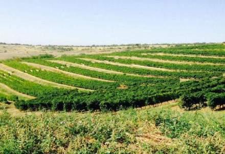 Crestere a vanzarilor de 3,5% pentru producatorul vinurilor S.E.R.V.E