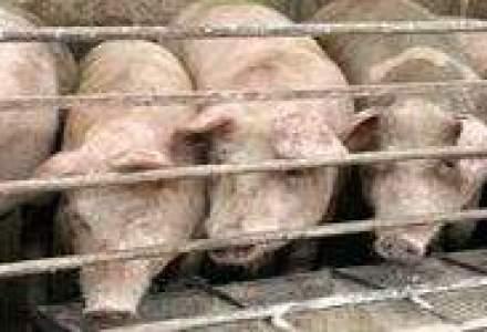 Porcul romanesc ar putea ajunge din nou pe mesele europenilor
