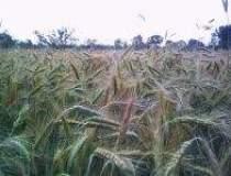 Rusia nu va importa cereale...