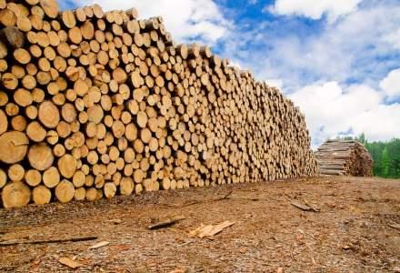 Holzindustrie, in fata acuzelor privind defrisarile ilegale: Preconizam o crestere a importurilor in Romania ca sa evitam orice fel de disputa