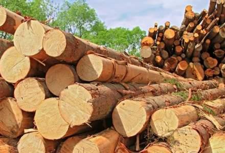 Inventarul Forestier: Lemnul recoltat in Romania, sub 50% din cresterea anuala a padurii