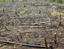 Distrugerea mediului,...