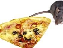 Un sobolan amator de pizza,...