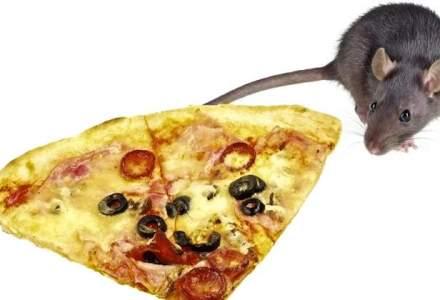 """Un sobolan amator de pizza si o parodie """"Star Wars"""" - printre cele mai amuzante virale din 2015"""