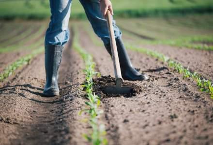 Locuri de munca pentru cei care vor sa munceasca in strainatate: se cauta muncitori in agricultura, asistente si soferi