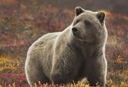 "Bursa romaneasca intra oficial in ""bear market"". Scaderile au ajuns la 20% fata de maxime"