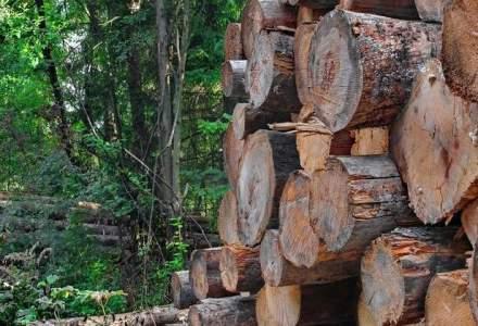 Mecanismul de stabilire a pretului la licitatii pentru masa lemnoasa, revizuit