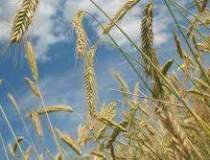 Importurile de cereale au...