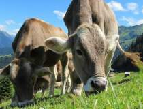Producatorii de lapte pot...