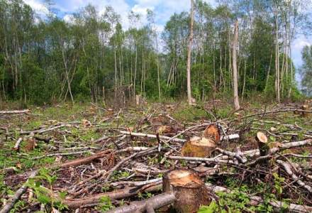 PSRO propune restrictii pentru strainii care vor sa cumpere terenuri si paduri in Romania