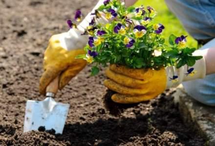 Sute de oameni din Oarja au plantat flori in gropile din asfalt