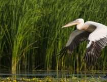 Ciolos: Delta Dunarii trebuie...