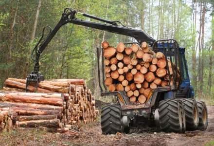 Padurarii: Din cauza valurilor de legi, peste 50% din fondul forestier a fost retrocedat