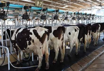 Achim Irimescu: Vom verifica ce subventii acorda Polonia si Ungaria pentru productia de lapte