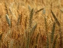 Fermierii vor putea lua de la...