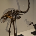 Muzeul Antipa - Foto 3 din 16