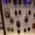 Muzeul Antipa - Foto 7 din 16
