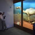 Muzeul Antipa - Foto 11 din 16