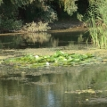 Delta Dunarii - Foto 5 din 7