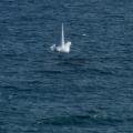 IAR 111 - Foto 6 din 13