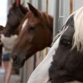 Clubul de echitatie Equestria - Foto 2 din 6