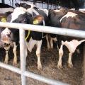 Ferma de vaci - Foto 1 din 8