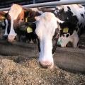 Ferma de vaci - Foto 2 din 8