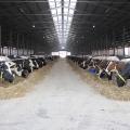 Ferma de vaci - Foto 3 din 8