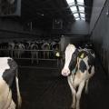 Ferma de vaci - Foto 5 din 8