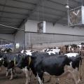 Ferma de vaci - Foto 7 din 8