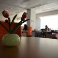 Birourile Domo - Foto 29 din 38