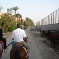 Cairo - orasul care nu doarme niciodata - Foto 21 din 26