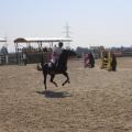 Salonul Calului - Foto 3 din 23
