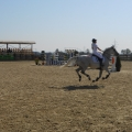 Salonul Calului - Foto 6 din 23