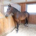 Salonul Calului - Foto 11 din 23