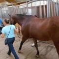 Salonul Calului - Foto 12 din 23